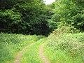 Pathway into Binning Wood - geograph.org.uk - 1376789.jpg