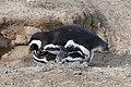 Peninsula Valdes, Wildlife 1.jpg