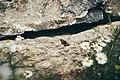 PermaLiv Sommerfugl ved Bilitt 03-07-20.jpg