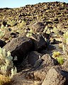 Petroglyph National Monument 001 by Samat Jain.jpg