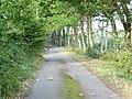 Pheasant near Pett Dane - geograph.org.uk - 241552.jpg