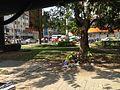 Phnom Penh BRT line 03 bus.jpg