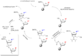 Phosphoramite Oligonucleotide Synthesis.png