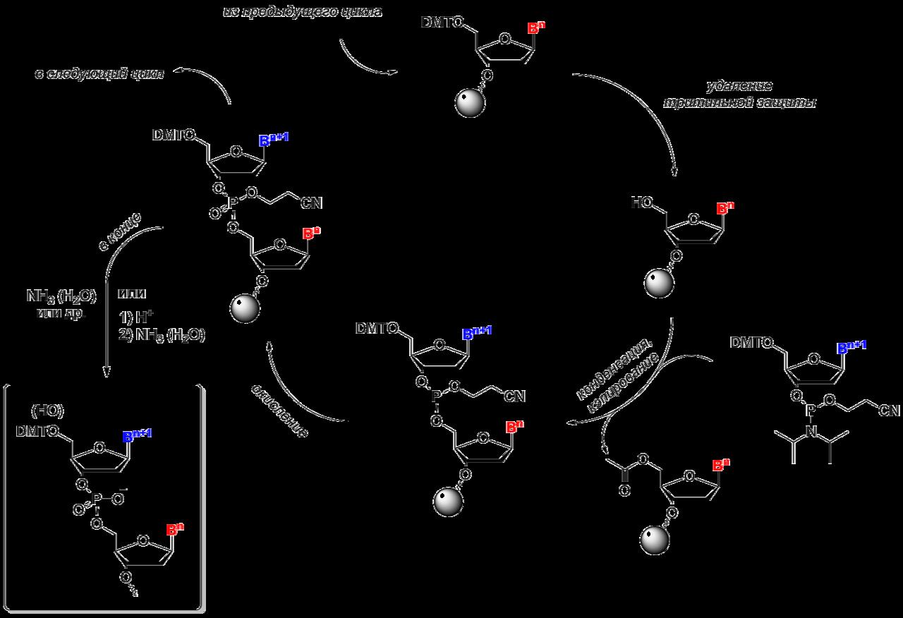 oligonucleotide synthesis