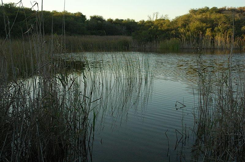 בריכה טבעית בשמורת טבע ניצנים