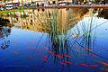 PikiWiki Israel 30404 Cities in Israel.JPG