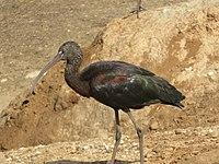 PikiWiki Israel 53074 wildlife animals.jpg