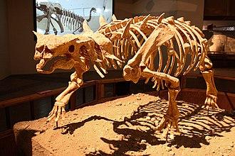 Pinacosaurus - Skeleton reconstruction