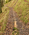 Pipe track in North Wood.jpg