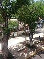 Place de la ville de Saint-Anne Martinique.jpg