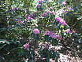 Plantes au jardin Albert Kahn 2.JPG