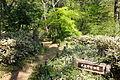 Plants - Institute for Nature Study, Tokyo - DSC02120.JPG