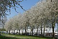Plantsoen 't Blok Spring 2020 P1460837.jpg