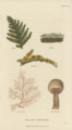 Plate 20 Cryptogamia - Conversations on Botany-1st edition.tiff