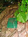 Pomnik przyrody przytuleni międzyzdroje tabliczka.JPG