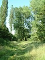 Poplars and hidden pool - geograph.org.uk - 193378.jpg
