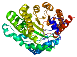 Protein UROD PDB 1jph.png