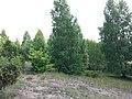 Przasnysz, Poland - panoramio (3).jpg