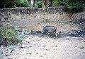 Pushkar - panoramio - yamarhythm (3).jpg