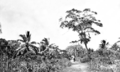 Queensland State Archives 5861 Road to village Yorke Island 20 July 1911.png