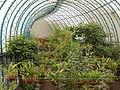 Quitos botaniska trädgård-IMG 8921.JPG