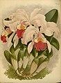 R. Warner & B.S. Williams - The Orchid Album - volume 11 - plate 521 (1897).jpg