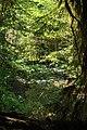 RAIN FOREST IN ELWHA - panoramio.jpg