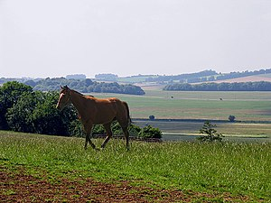 Berkshire Downs - Racehorse on farmland in Lambourn