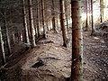 Radevormwald Vorm Baum - Landwehr 05.jpg