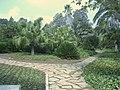 Ramat Hanadiv Palms gard1.jpg