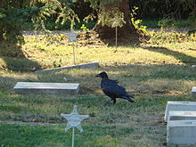 Cultural Depictions Of Ravens Wikipedia