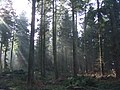 Redlands Wood - geograph.org.uk - 328594.jpg
