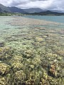 Reef flat Lilipuna pier.jpg
