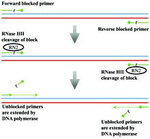 RNase H-dependent PCR - Wikipedia