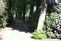 Rhododendronpark Bremen 20090513 032.JPG