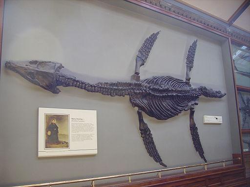 Rhomaleosaurus & Mary Anning plaque NHM