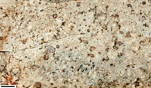 Porphyry (geology) - Rhyolite porphyry.  Scale bar in lower left is 1 cm.
