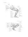 Richer - Anatomie artistique, 2 p. 145.png