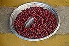 Ripe fruits of Myrica esculenta Box myrtle tree for sale JEG6437.jpg