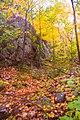 Rock (1538941125).jpg