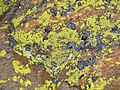 Rocky Mountain National Park in September 2011 - Tundra Communities Trail - tor closeup of schist part.JPG