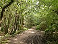 Roman Road Chilworth - September - geograph.org.uk - 477609.jpg