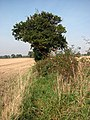 Rosehips in field boundary hedge - geograph.org.uk - 1002878.jpg