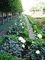 Rosengarten, Neue Residenz (The rose garden at the Neue Residenz) - geo.hlipp.de - 21736.jpg