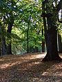 Rzucewski park..jpg