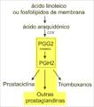 Síntese de prostanoides miguelferig.png