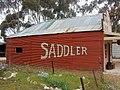 Saddler (37805499386).jpg