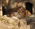 Saint Louis Zoo 018.jpg