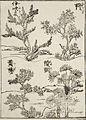Samples of Four Tree Types for Artists LACMA M.2000.104.33.jpg