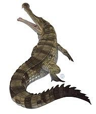 Sarcosuchus — Wikipédia